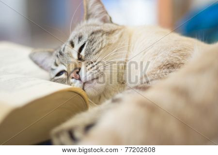Cat Lazy On Open Book