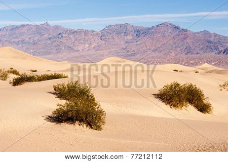 Sand Dunes Death Valley Desert Mesquite Flat Grapevine Mountains