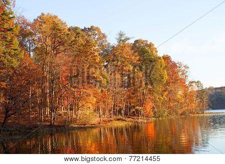 Colorful Lakeside Treeline