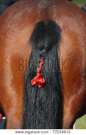 Bay Horse Tail With Red Ribbon