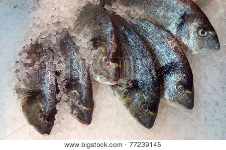 Fresh Fish Layed On Ice For Sale At The Seafood Market