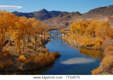Yellow Cottonwood Trees In Nevada By River