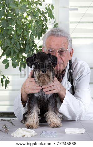 Dog On Examination