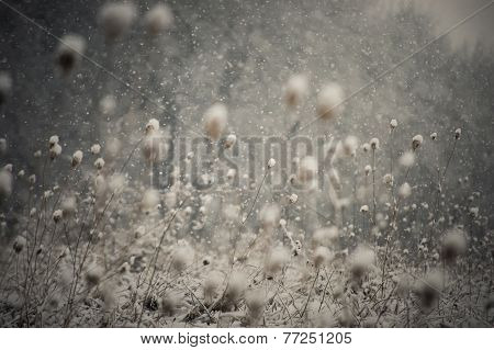 Snow flakes falling in winter over plants