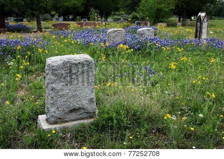 Bluebonnet Tinged Cemetery