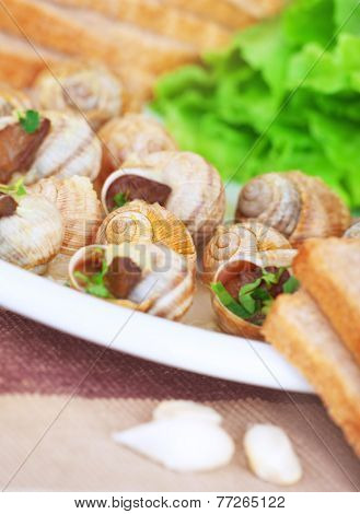 Tasty escargot dish on the plate with bread and garlic, traditional french delicatessen, healthy nutrition, luxury restaurant food