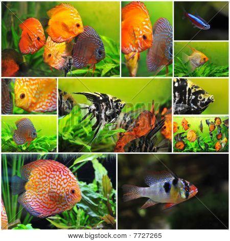 Grupo de peixes