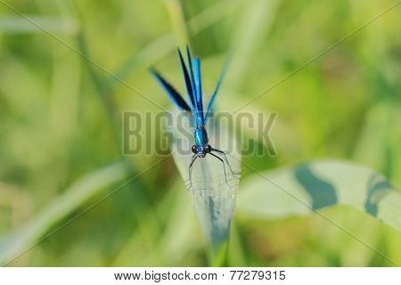 violet dragonfly in summer day