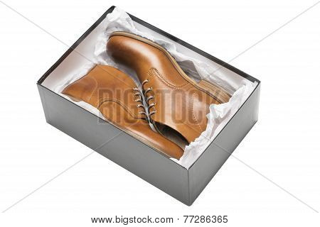New Brown Shoes In Box