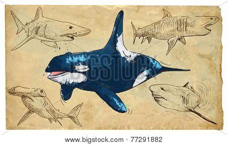 Animals, Theme: Sea Predators