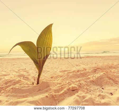 Palm sprout on tropical beach