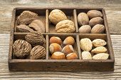 picture of pecan nut  - a variety of nuts  - JPG
