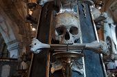 pic of head femur  - Lonely skull  - JPG