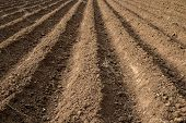 picture of farm land  - Earth Soil Grooves Farming Earth soil grooves over field for crop planting on rural countryside farm lands - JPG