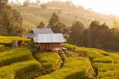 pic of bong  - Hut in green terraced rice field during sunset at Ban Pa Bong Peay in Chiangmai - JPG