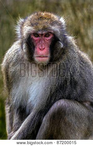 Portrait Of Monkey 3