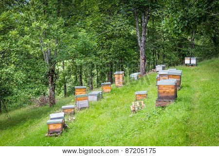 Apiary With Several Man-made Beehives In The Pyrenees