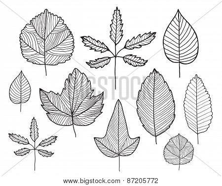 vector set of hand drawn doodle line leaves