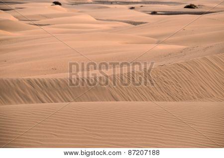 Sand Dune Desert in Maspalomas