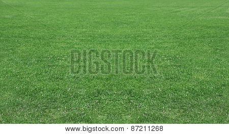 Green Wheat On A Grain Field Grass Texture Background