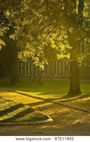 Yellow autumn Sunrise in Topcider park, Belgrade