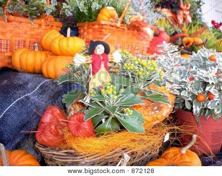 Pumpkin Six