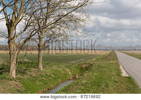 Dutch Farmland With Bare Trees In Spring