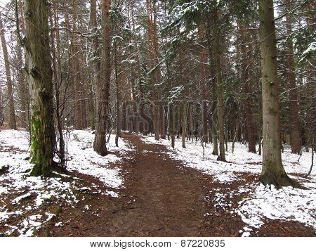 walking in the cold nature