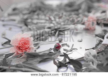 Cut Rose Flower In Black And White Background