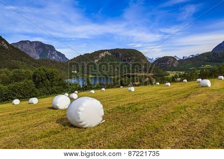Haying In The Field. Picturesque Rural Landscape. Norway.