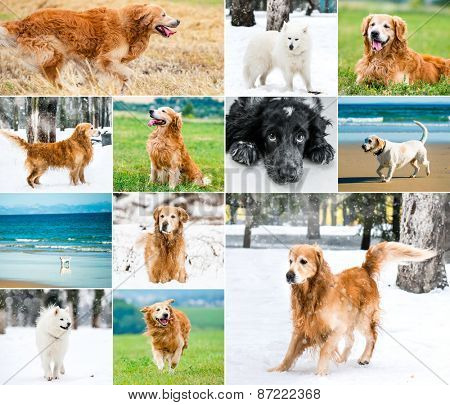 photo collage of a dog on the background of nature in different seasons