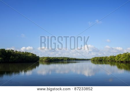 Red Florida Mangrove Trees