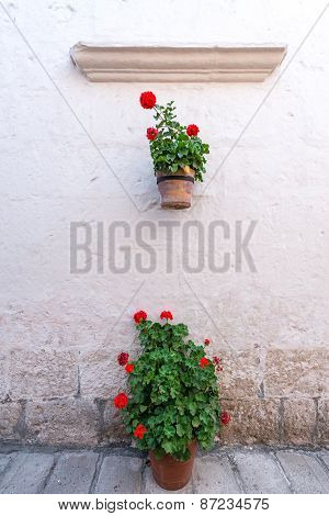 White Colonial Wall And Flowers