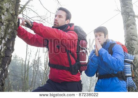 Male hikers exploring tree trunk in forest