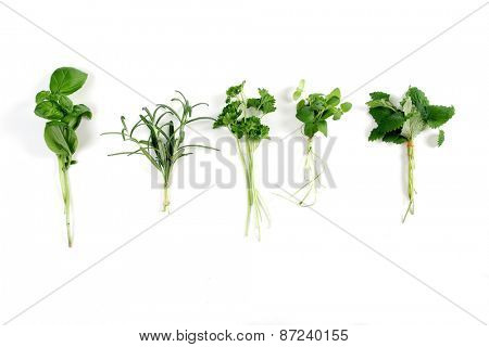 Studio shot of fresh herbs