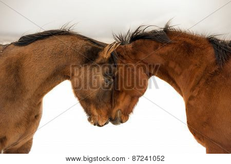 Horses love greeting