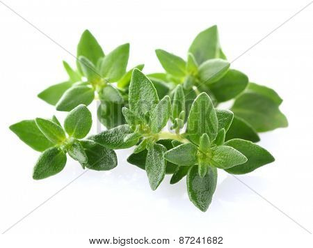 Oregano in closeup