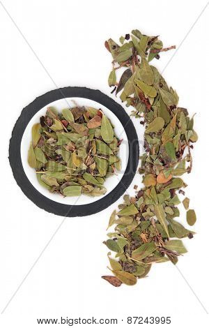 Uva ursi herb leaf sprigs in a porcelain bowl and loose over slate round and white background. Arctostaphylos.