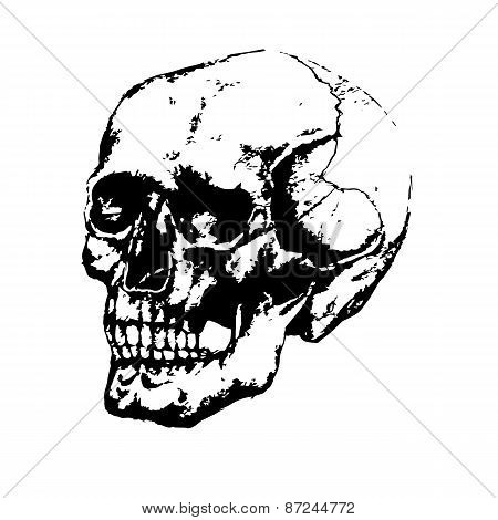 Black and white image of the skull, painted by hand.