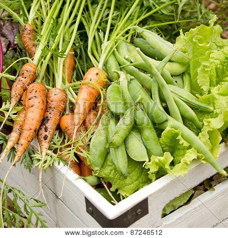 Organic Garden Harvest