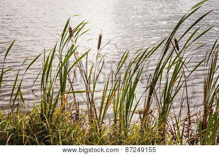 Pond Side