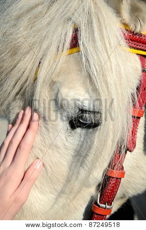 Girls Hand Stroking Face White Pony