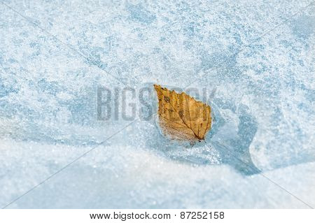 Autumn Leaf On The Ice