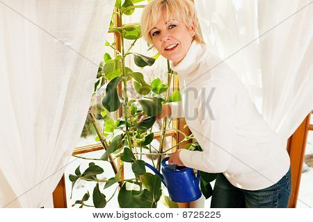 Woman watering the flowers at home