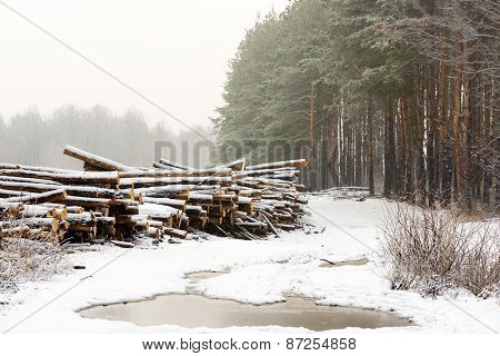 The cut down trees lying together in wood. A winter season.