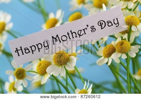 Happy Mother's day card with chamomile flowers