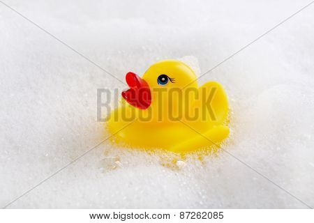 Rubber duck in foam close-up