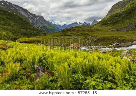 The Picturesque Mountain Landscape With A Creek And Fern Thickets.