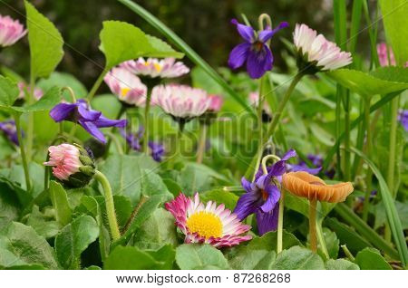 Spring Flowers And Small Esculentus Mushroom