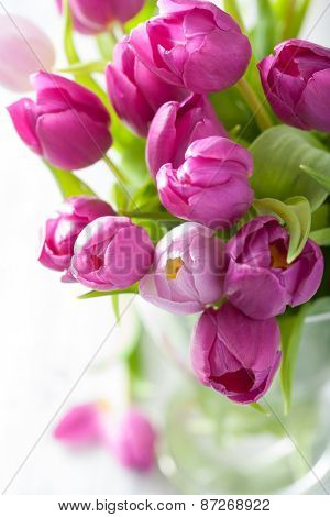 beautiful purple tulip flowers in vase